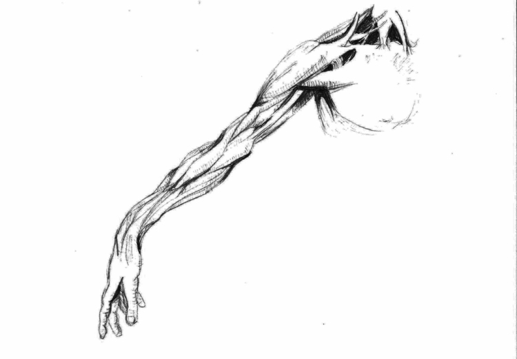 muscle, anatomy, anatomical, veins - blablach | ello