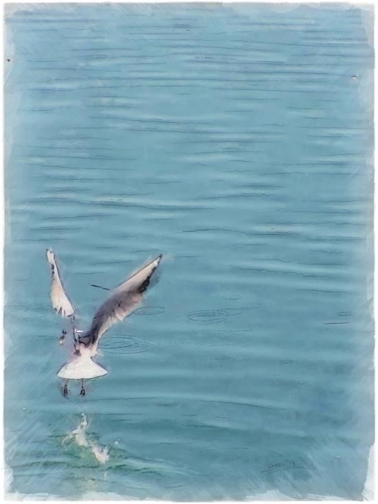 Seagull water - filigranasdigitales | ello