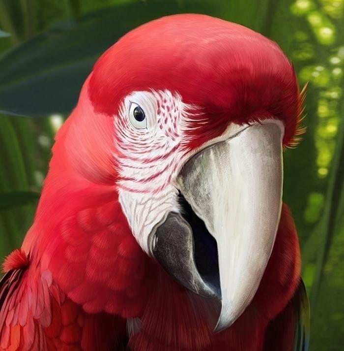 macaw, bird, 2d, 2dillustration - lucassomariva | ello