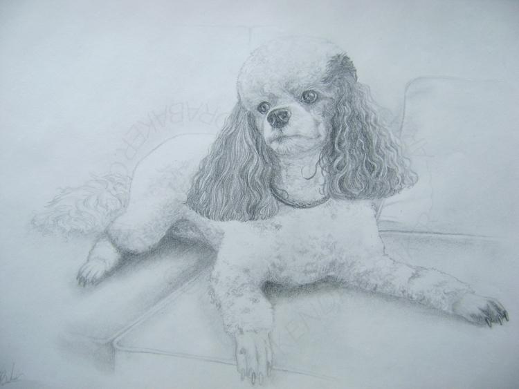 Pablo Dalmadoodle Paid portrait - kendra-5062 | ello