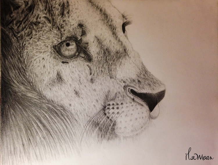 LION - illustration, drawing - ilsemoar | ello