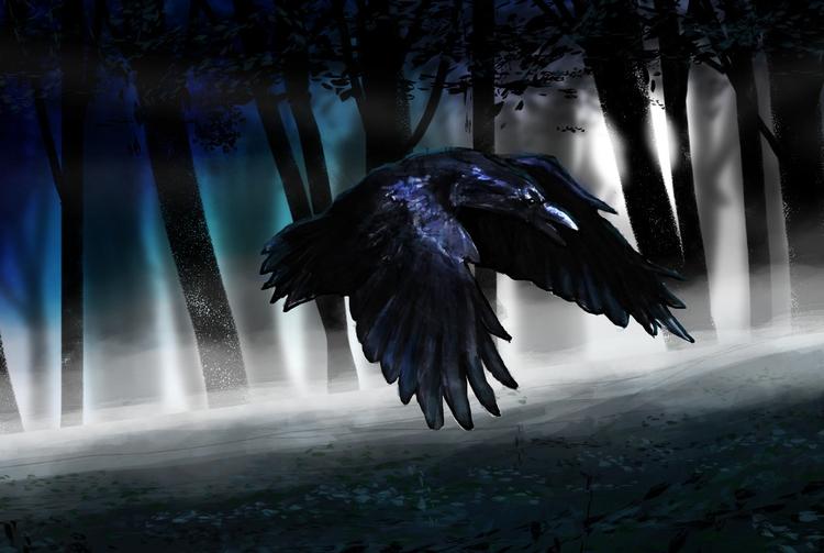 Corvo - Crow - corvo, crow, night - walbersantos | ello