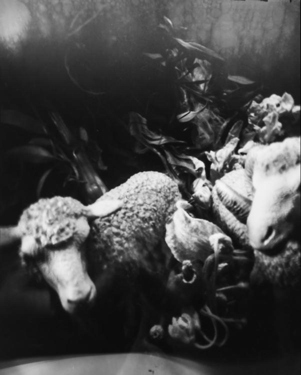 Las ovejas ¡Cuatro Patas Sí Dos - lnavarrogranero | ello