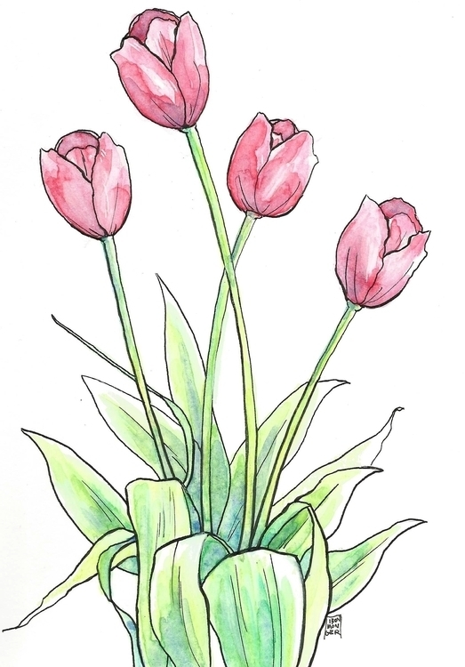 Tulips, watercolor ink - illustration - ironmonger | ello