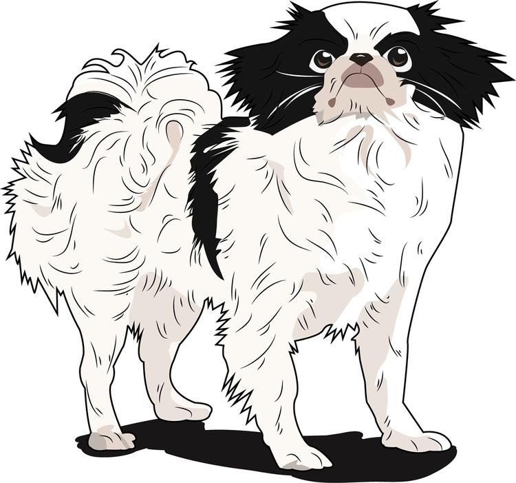 Japanese Chin - dog, vector - itsamebry | ello