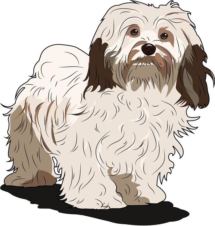 Havanese - dog, vector - itsamebry | ello