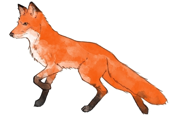 fox, illustration - amywiseman | ello