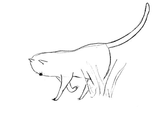 Exploring Cat - grass, cat, illustration - finlaysonillustration | ello