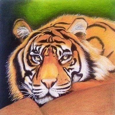 Tiger - coloredpencil, tiger, illustration - sylverdesign | ello