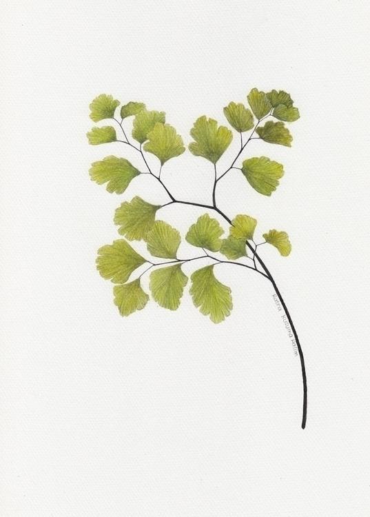 botanicalart, botanical, botanicalillustration - ratnakusumahalim | ello