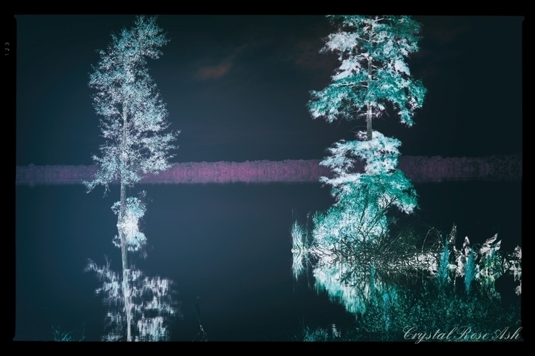 reflecting glow - tree, trees, landscape - crystalrose-5770 | ello