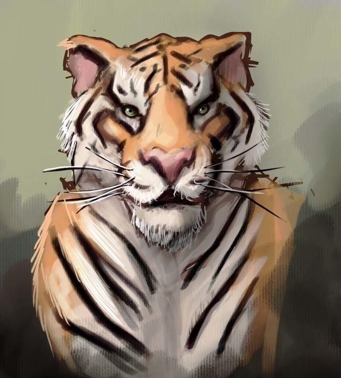 Tiger study - illustration, sketch - npzorzetto | ello