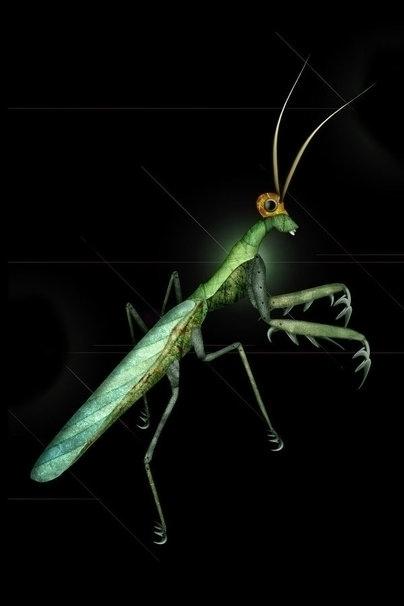 Mantis - illustration, insects, photoshop - akumimpi | ello