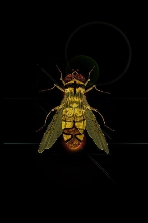 Bzzz - illustration, insect, metal - akumimpi | ello
