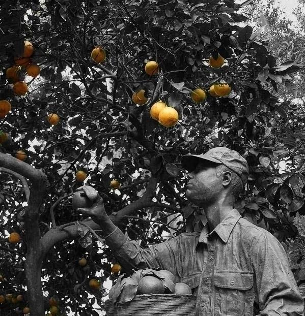 Agent Orange - oranges, agent, sculpture - cmvanclevephotography | ello