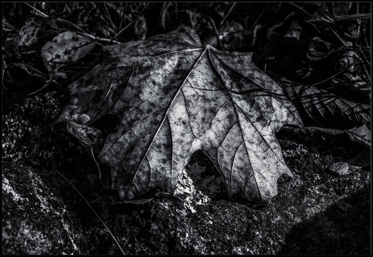 Autumn leaves - andma | ello