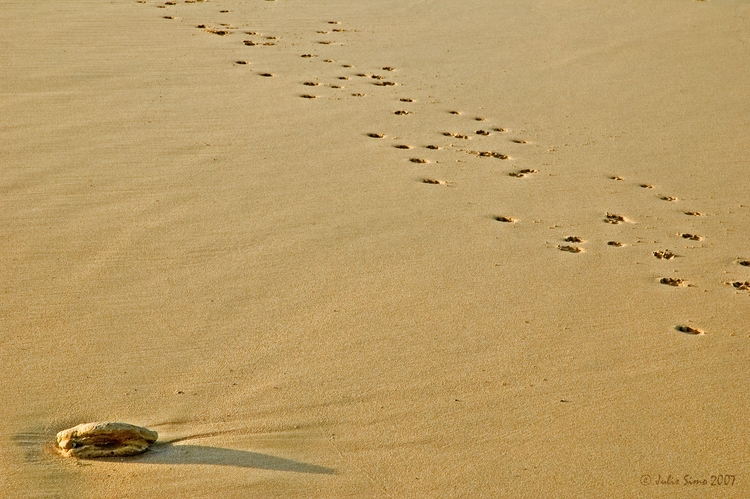 Golden Sand 4 - sand, beach, serenity - julissimo | ello