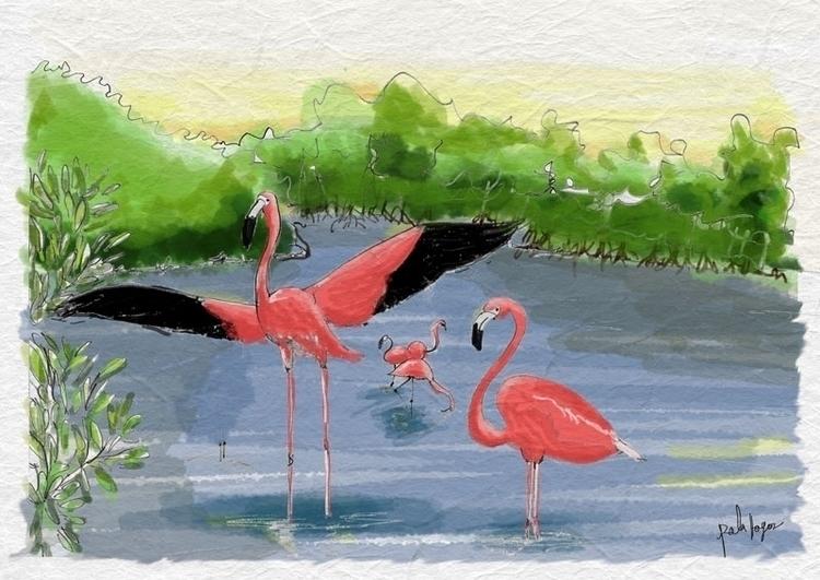 Flamingo Rosados La Guajira - palahoyos | ello
