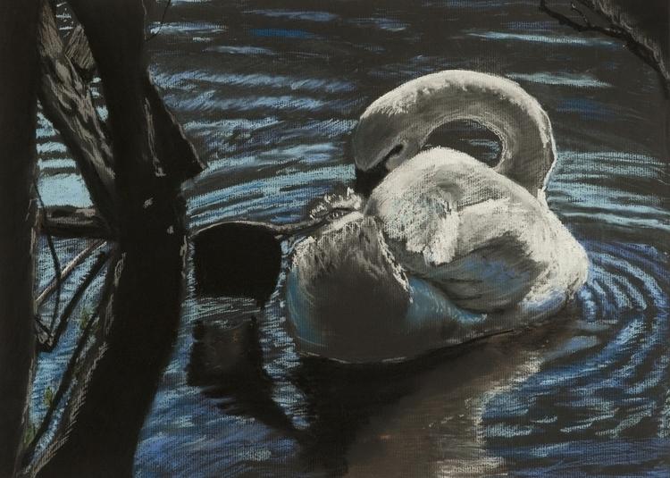 Swan - bird, swan, pastels - jlebedev | ello
