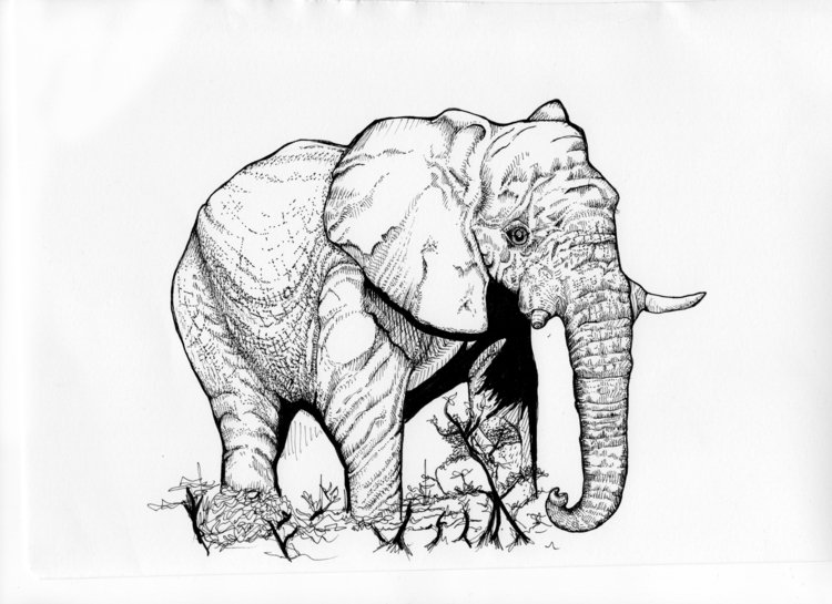 Elephant trampling bush - elephant - rebeccalee-1135 | ello
