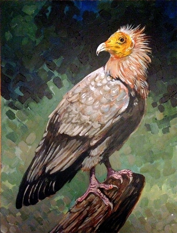 Egyptian vulture. Trade, NFS 12 - hootbark-1142 | ello