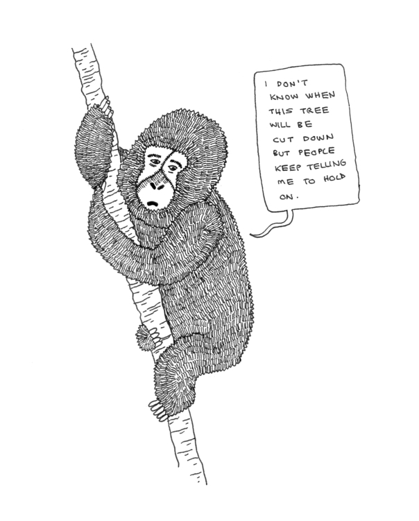 monkey, animal, tree, story, fall - ajsazdrav | ello