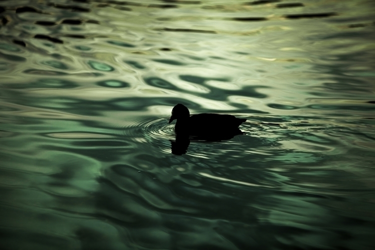birds, photography, water, surreal - lightbluewingedfairy | ello