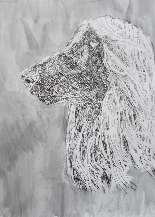 Afghan hound - illustration, dog - kleckerlabor-5193 | ello