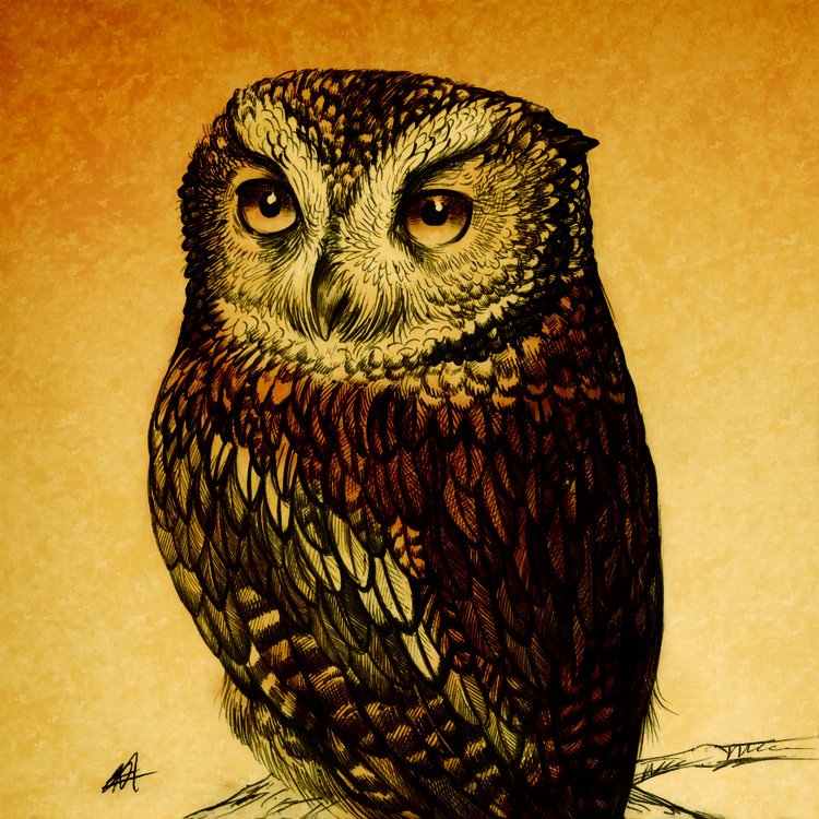 illustration, littleowl, nocturnalbird - kamaarts | ello