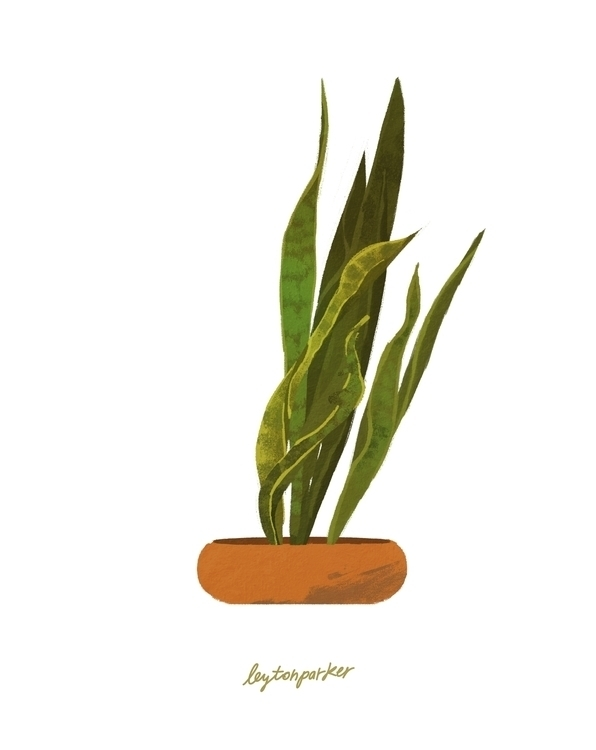 House Plant 2/2 - plants, flowers - leytonparker | ello