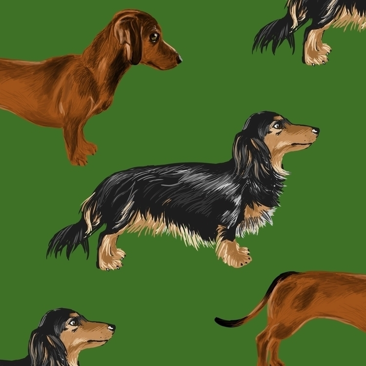 Dachshund pattern - illustration - madelinekohm | ello