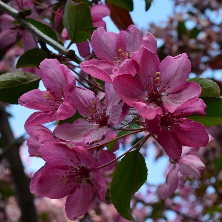 Floral Aesthetic pt.3 - photography - laurentesch   ello