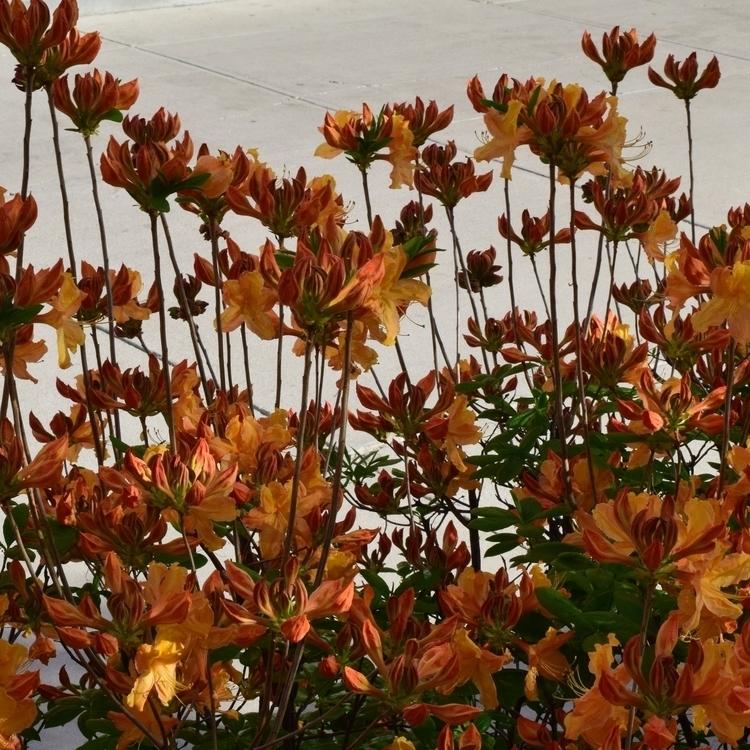 Floral Aesthetic pt.4 - photography - laurentesch | ello