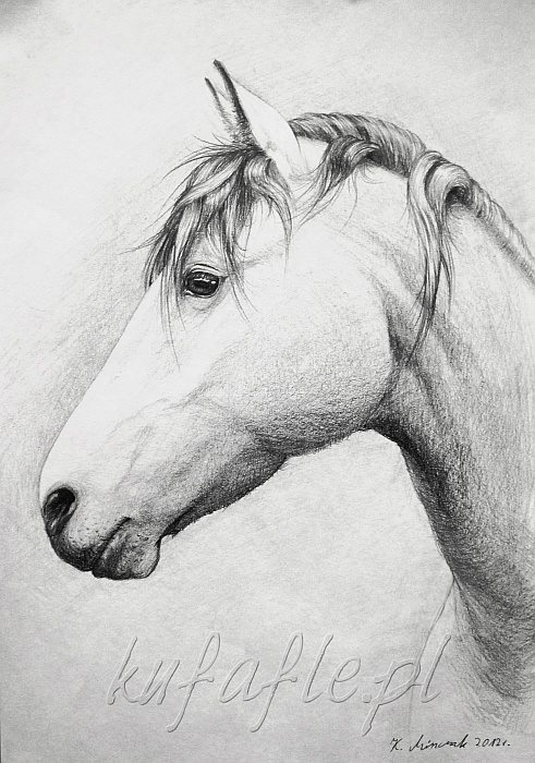 pencil drawing - horse, horses, portrait - kufafle | ello