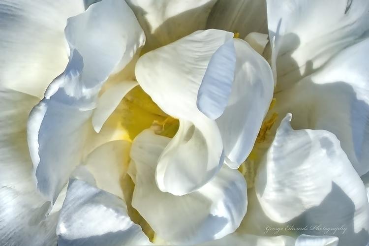 White Flower - flower - geoart | ello