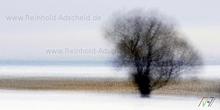 Winter-Weide/23 2013 Edition: 2 - reinholdadscheid-1726 | ello