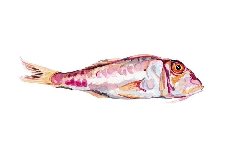 Red mullet - fish, fishing, watercolour - hollyexley   ello