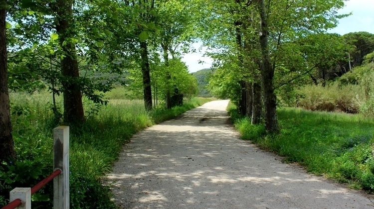 road, trees, nature - marisa2794   ello