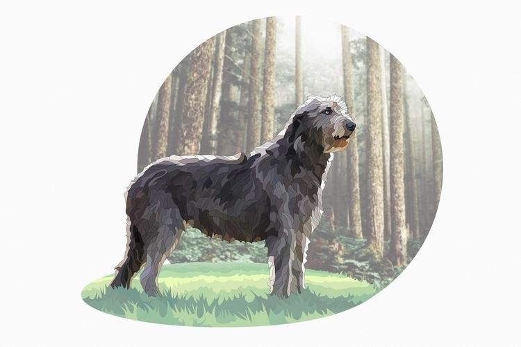 Irish Wolfhound - illustration, vectorart - nickolayapraksin | ello