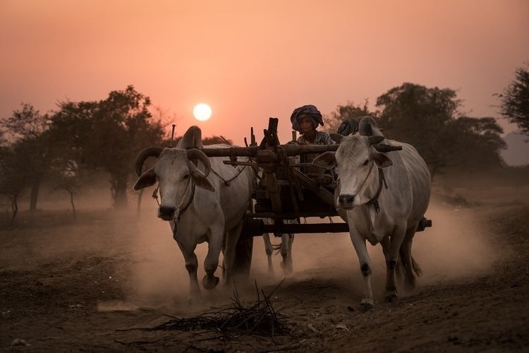 day. farmer cart return home ro - chriskonig | ello