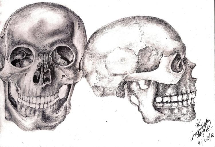skull, skulls, human, skeleton - amandaloyolla | ello