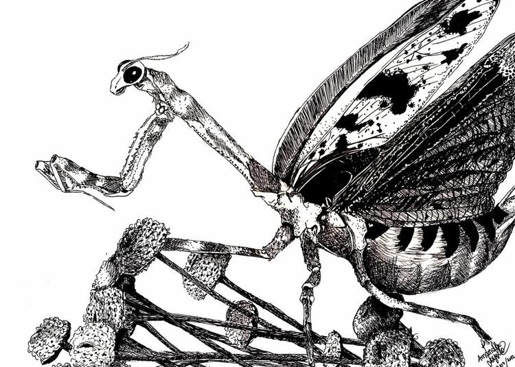 mantis, prayingmantis, louvadeus - amandaloyolla   ello