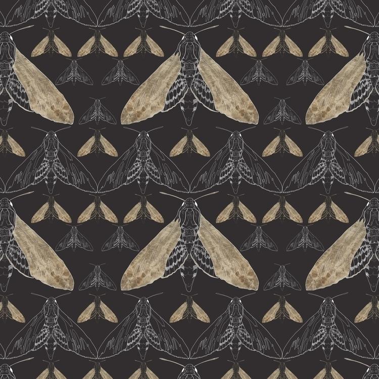 Moth pattern - illustration, butterfly - gretaberlin | ello