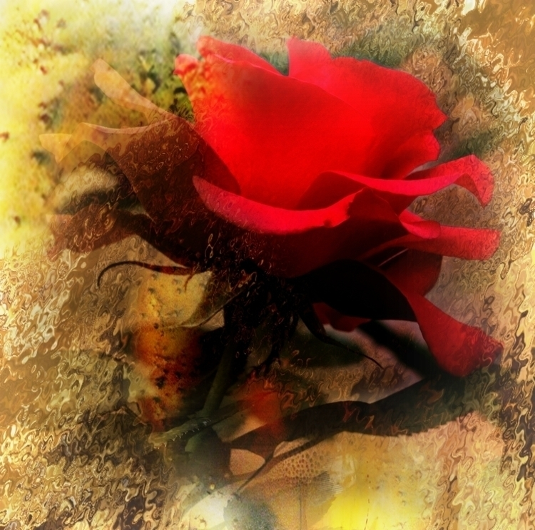 RED ROSE - red, rose, flowers, abstract - carmenvelcic | ello