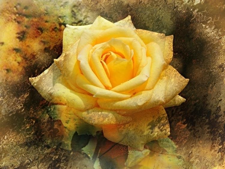 YELLOW ROSE - yellow, rose, flowers - carmenvelcic | ello