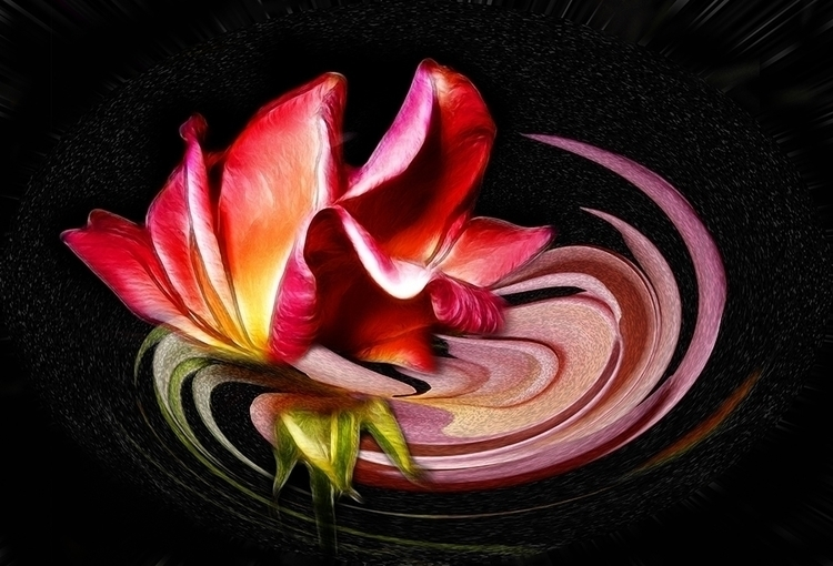 ROSE - digital, abstract, flowers - carmenvelcic | ello