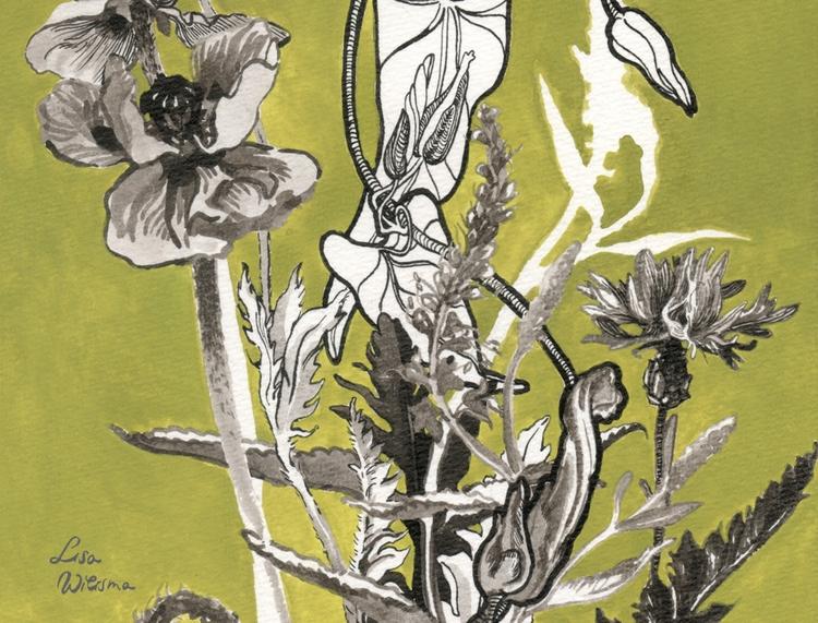 Lisa Wiersma, Field-flowers, 20 - lisawiersma | ello