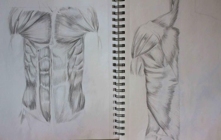 Torso Muscles - illustration, drawing - mhettich   ello