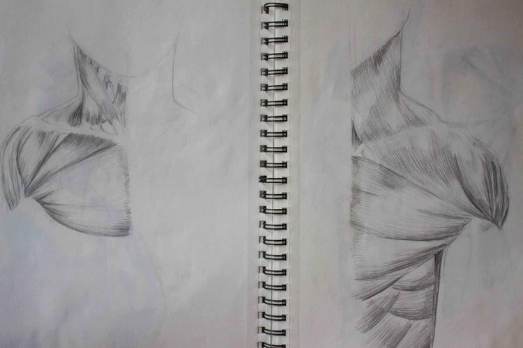 Upper Torso Muscles - illustration - mhettich   ello