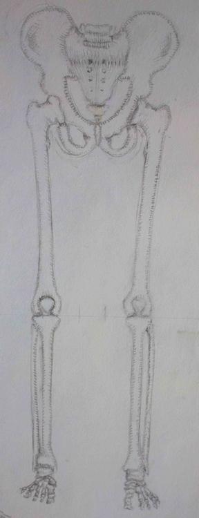 Skeleton - mhettich | ello